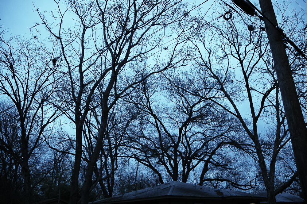 Skeleton Trees, Blue Light, Winter