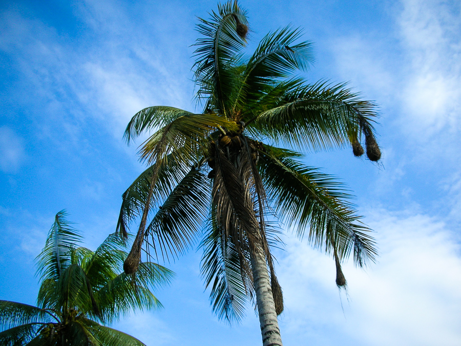 Guyana, Palm Tree, Sky