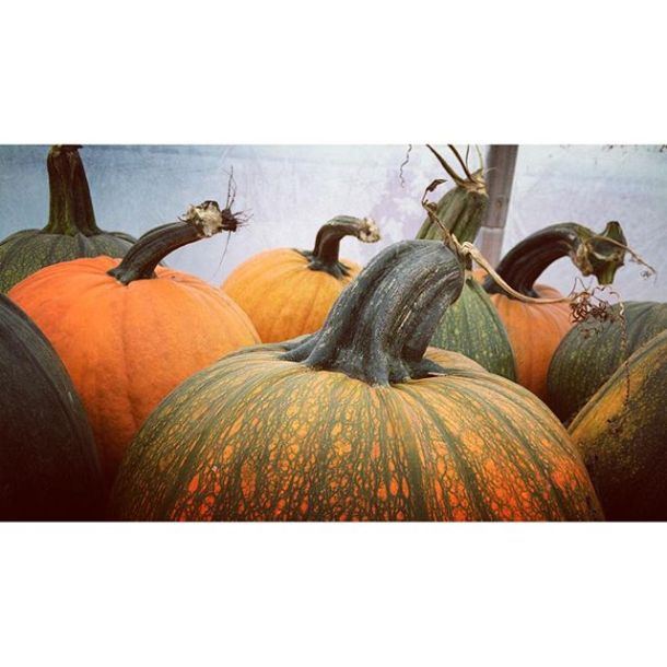 Pumpkins @riverbendgarden #riverbendgardens