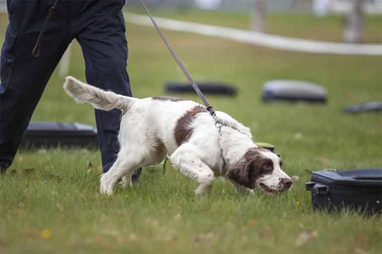 How do Ultrasonic Dog Trainers Work