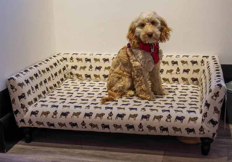 How you Can Choose the Right Dog Bed?
