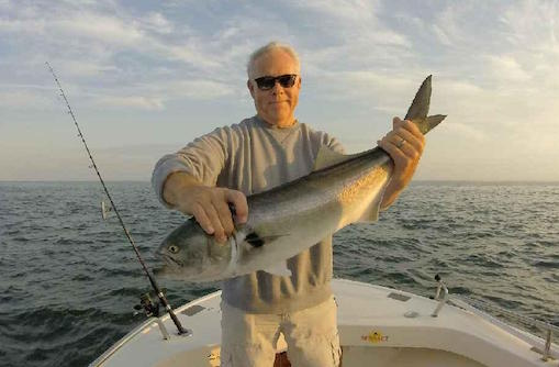 Bluefish caught aboard Rob Thompson's boat. Photo: Rob Thompson
