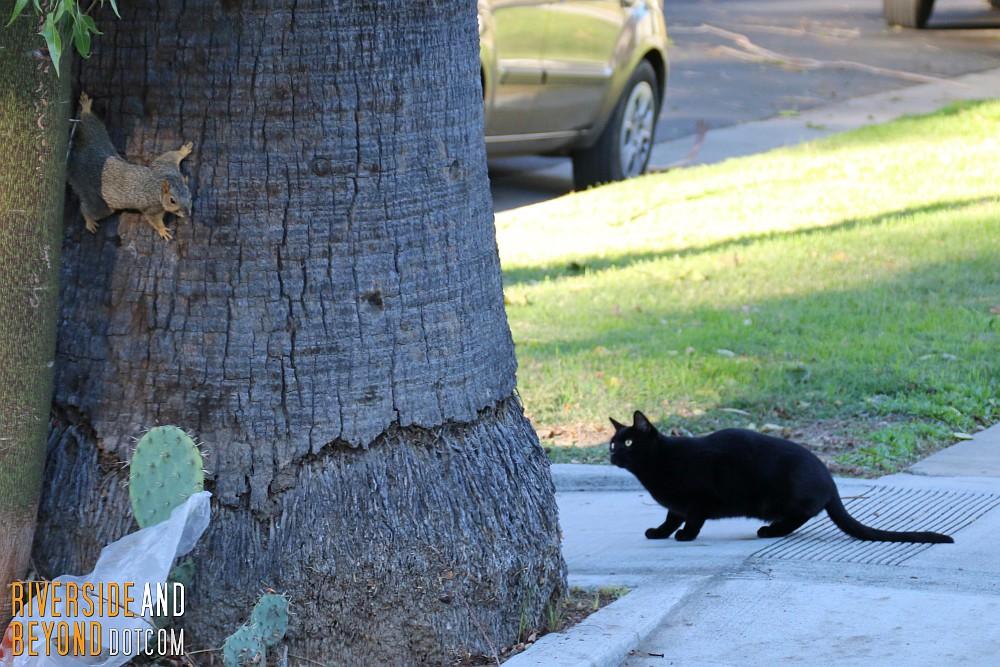 Squirrel vs. Cat