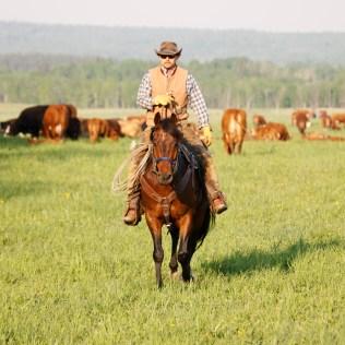 South Pasture Round Up