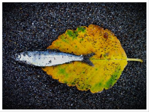 Stilllife_deadfish