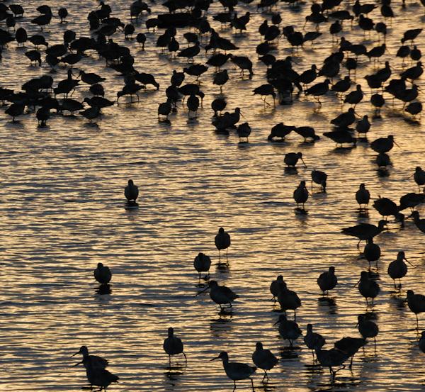 Bodegabirds-1