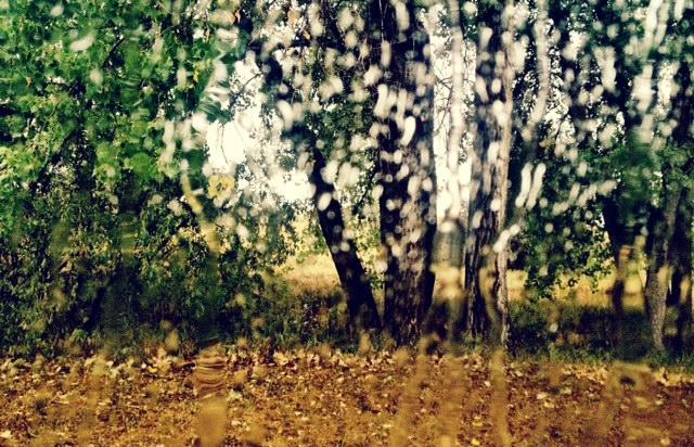 Rain_cherrycreek