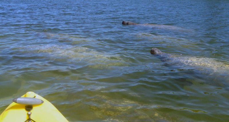 Kayaking_curryhammock-11