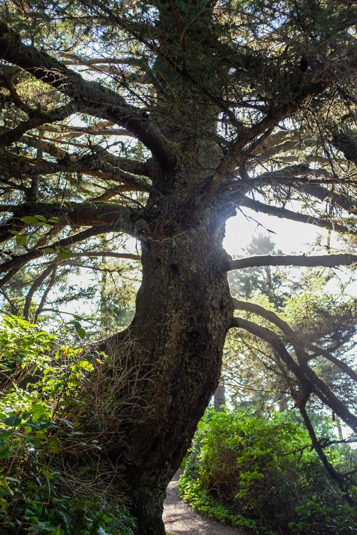 Greatspruce_hike-1