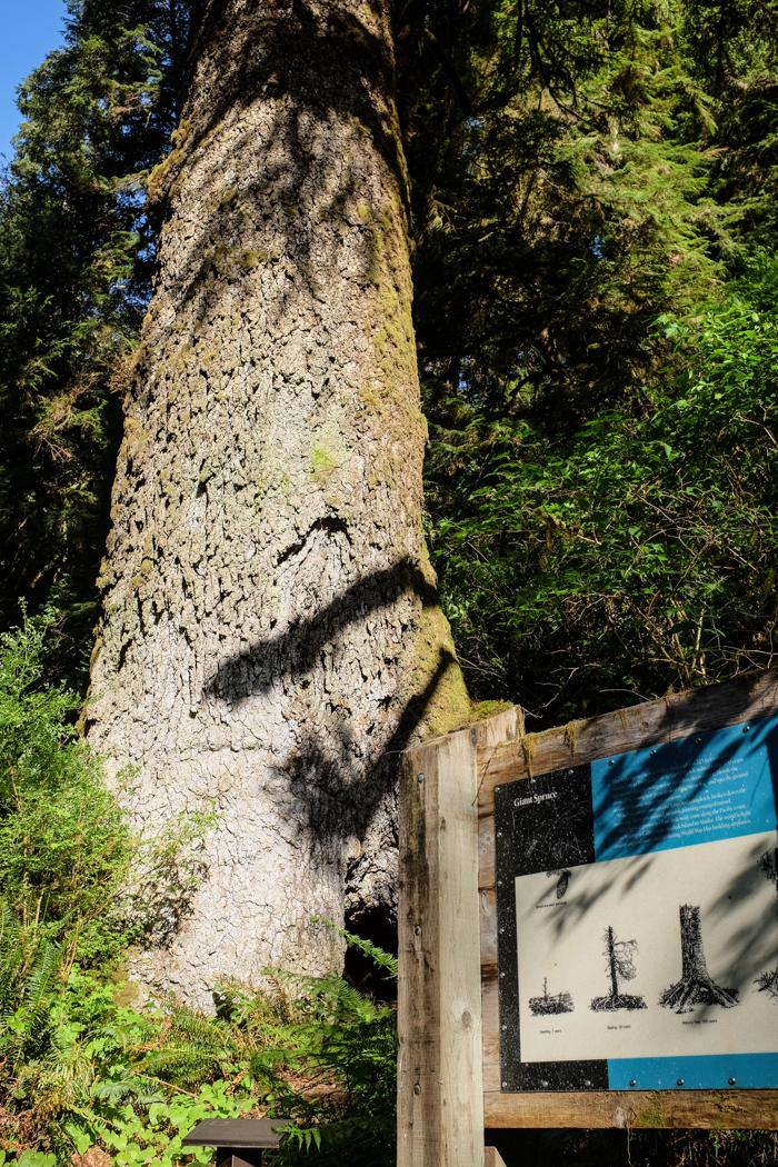 Greatspruce_hike-8
