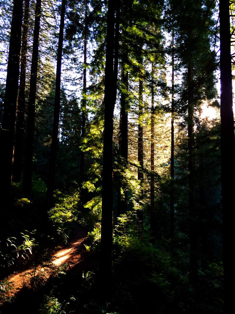Arboretum_fall-1