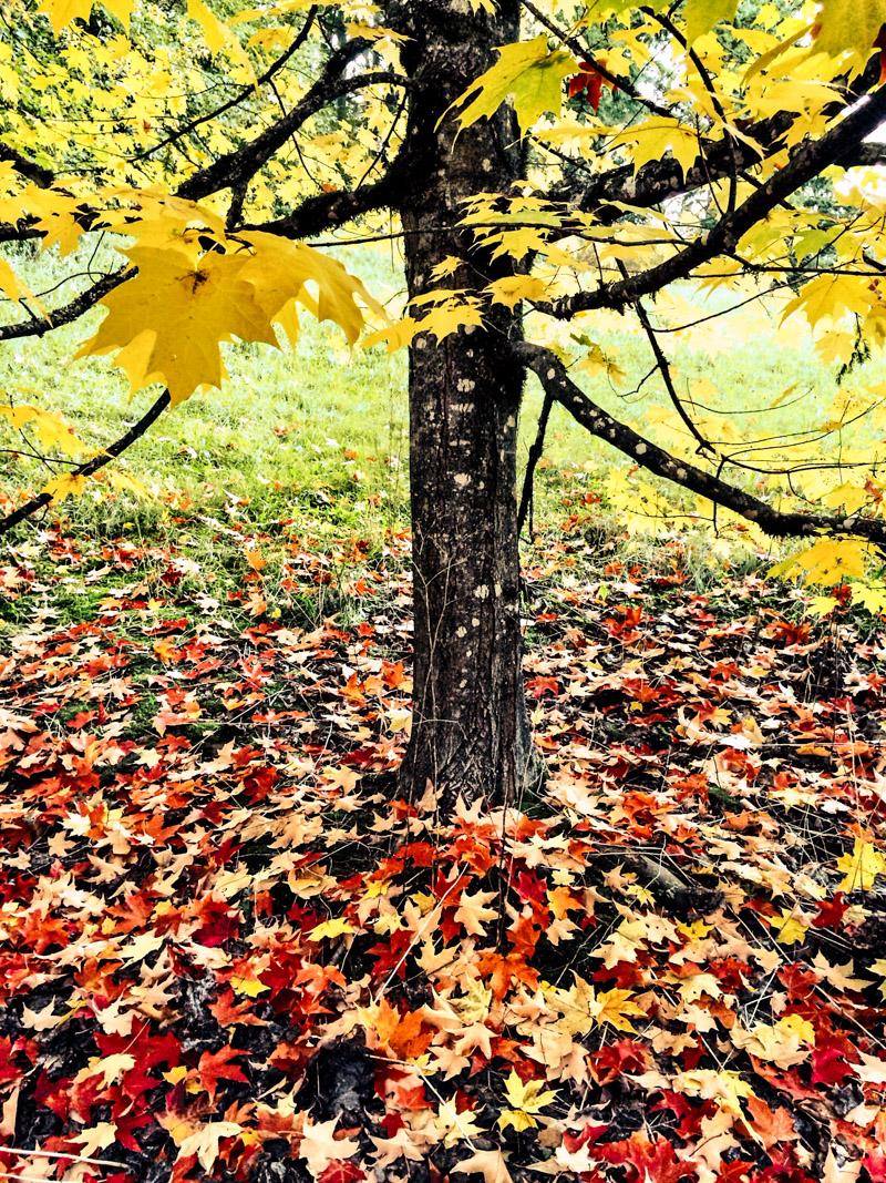 Arboretum_fall-4