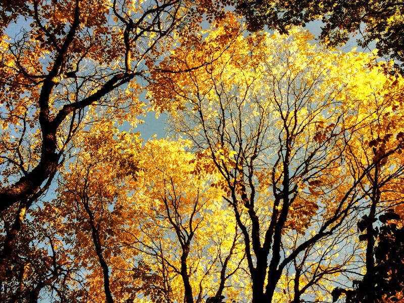 Arboretum_fall-2