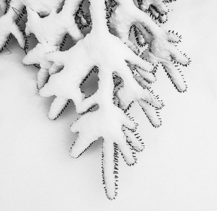 Snowyhike-4918