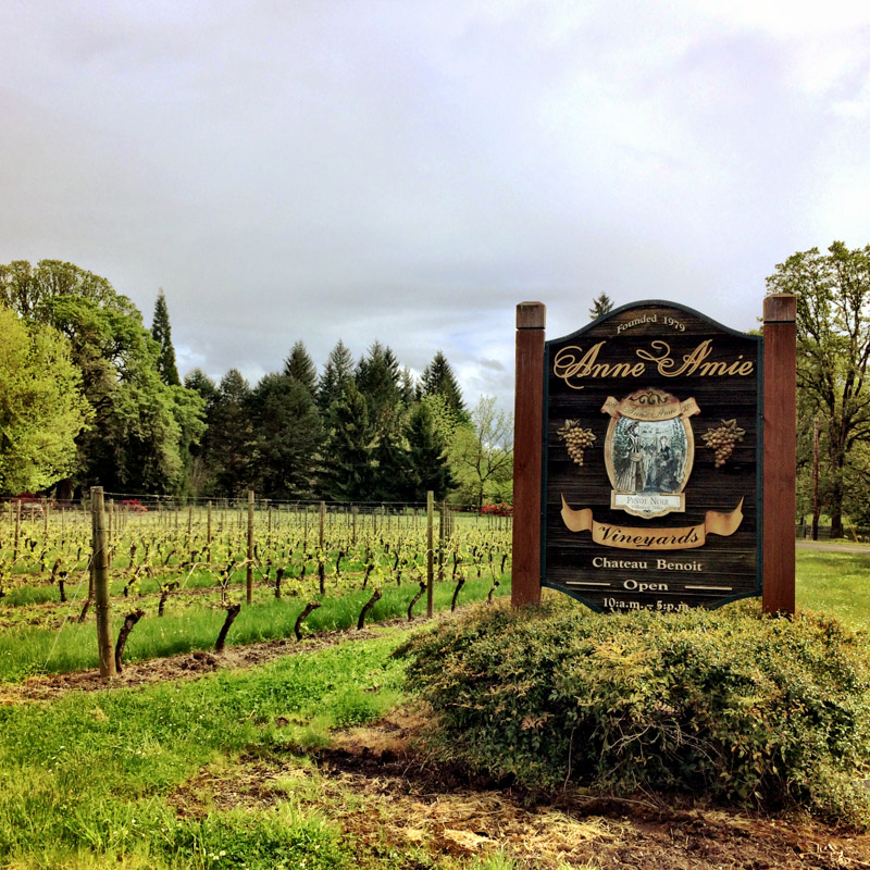 Winecountry-6