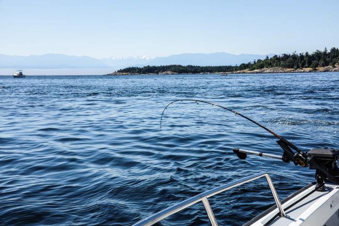 Fishing_pedderbay-0661