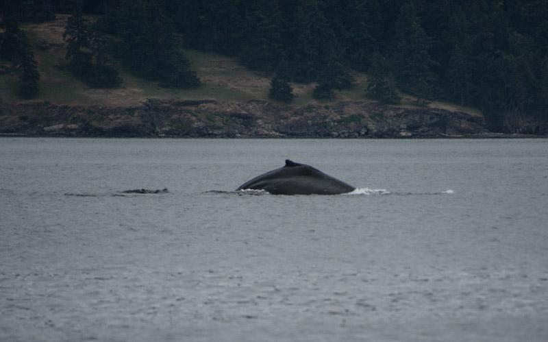 Whales-2205