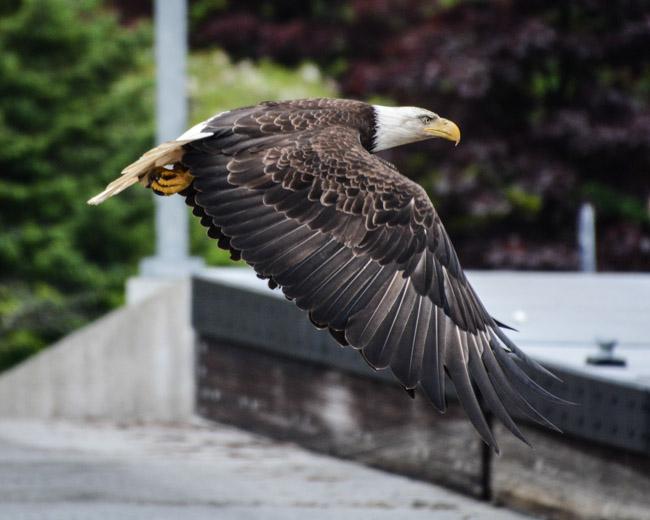 Eagles-3883