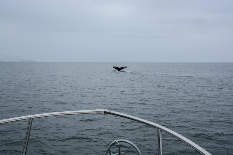 Humpbacks-5643