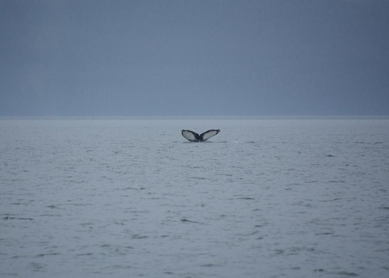 Humpbacks-5675