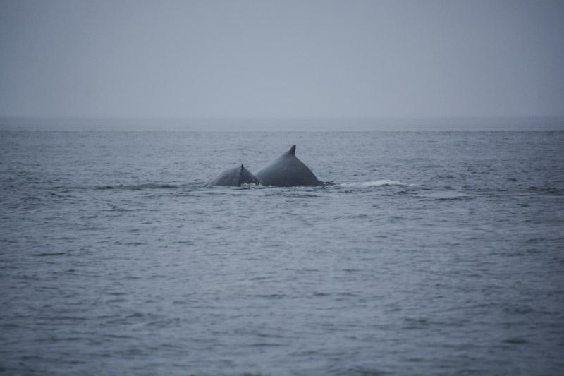 Humpbacks-5712