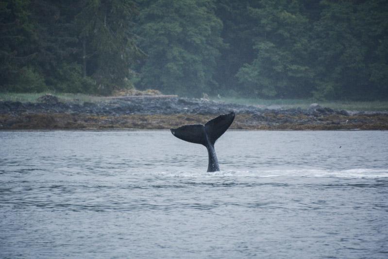 Humpbacks-5782