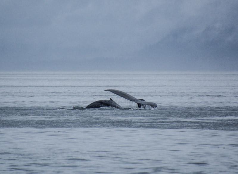 Humpbacks-5920
