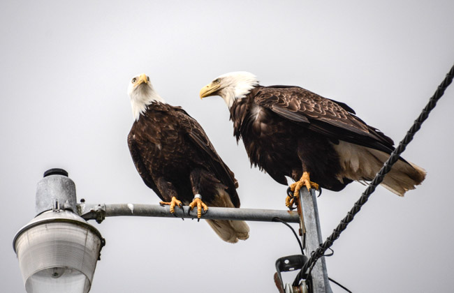 Eagles-