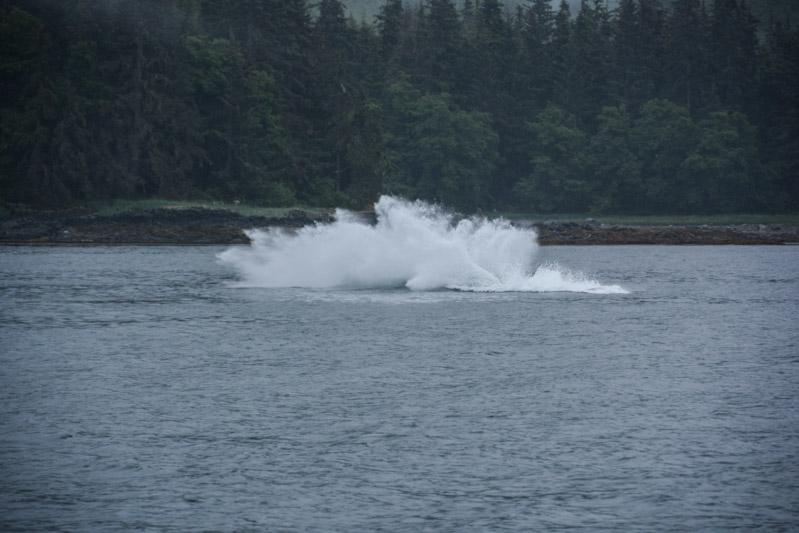 Humpbacks-5776