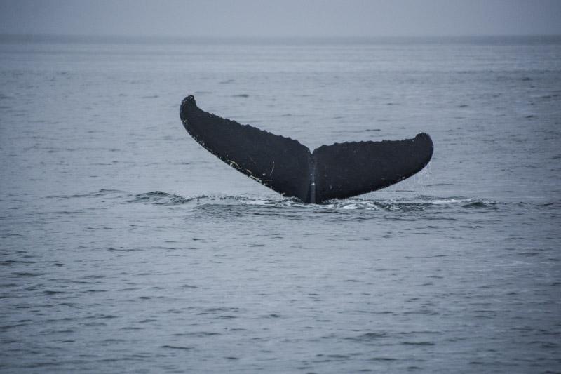 Humpbacks-5872