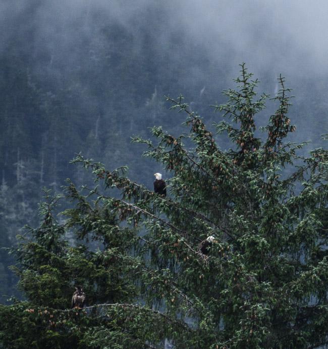 Eagles-3878