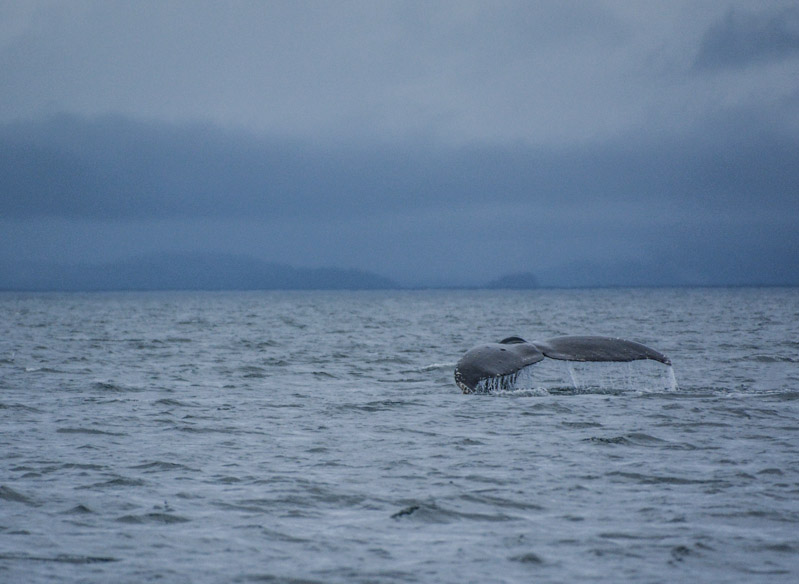 Humpbacks-5937
