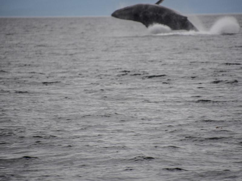 Humpbacks-6976