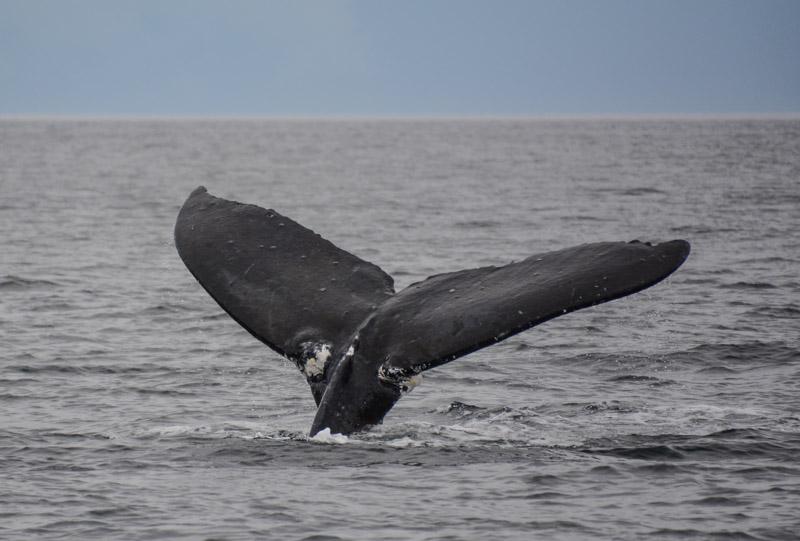 Humpbacks-6972