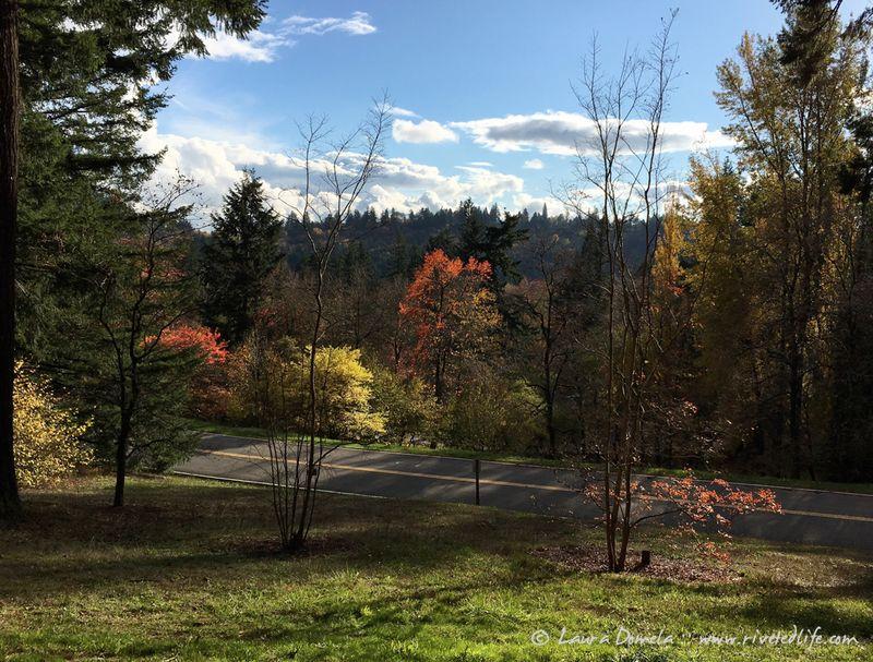 Arboretum_fall-9932