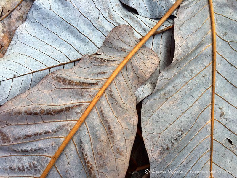 Arboretum_fall-9928