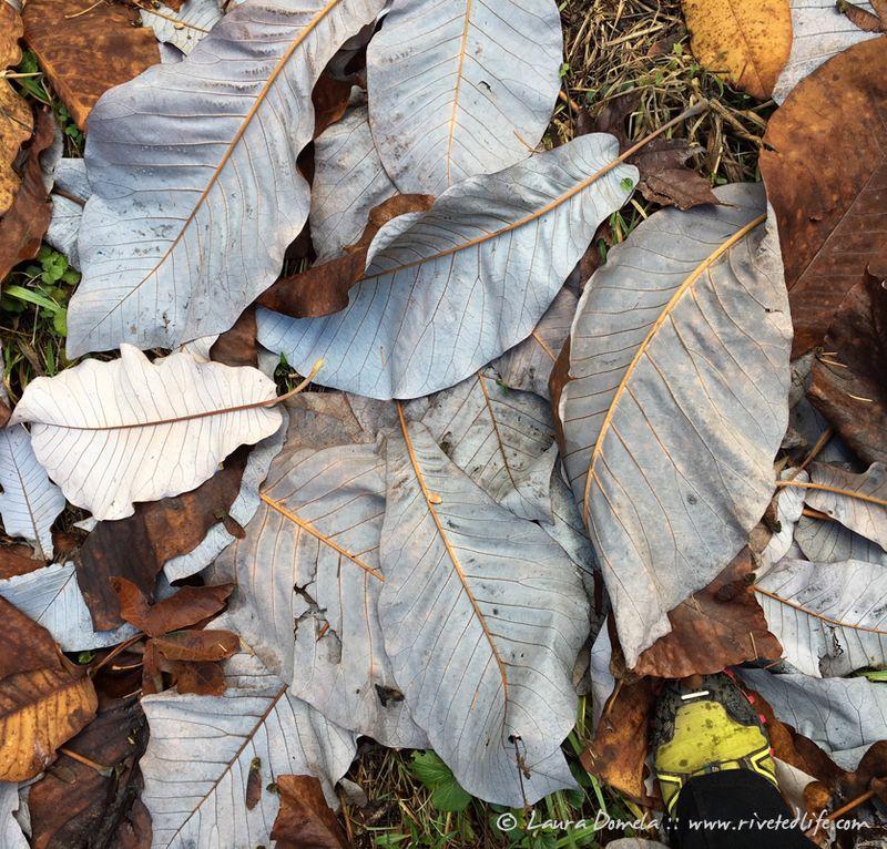 Arboretum_fall-9934