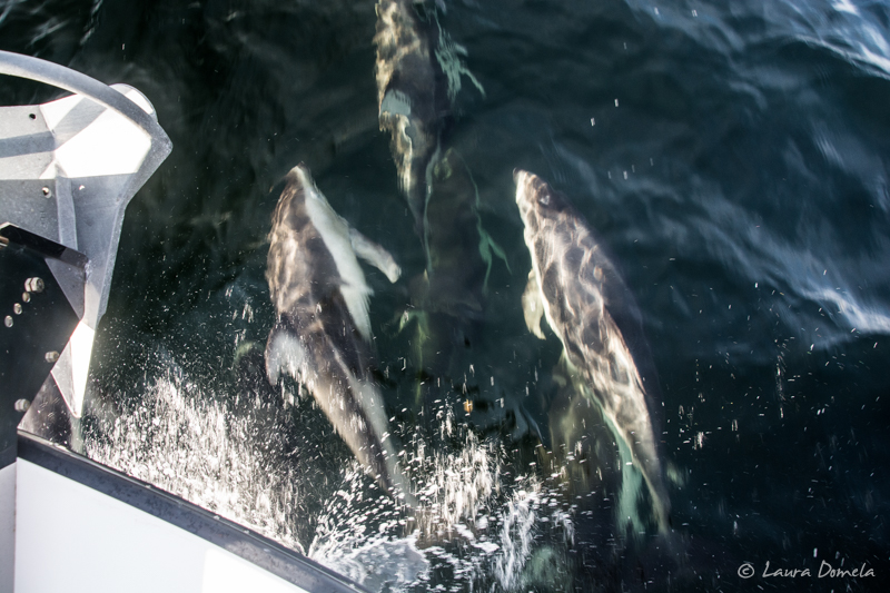 Dolphins-0954