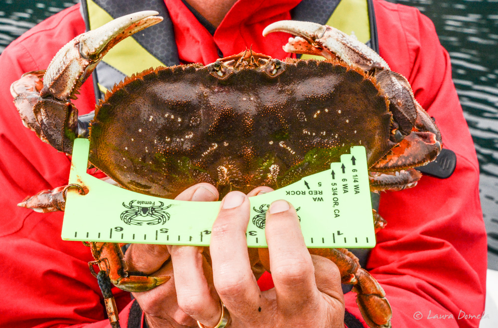 crab-2095