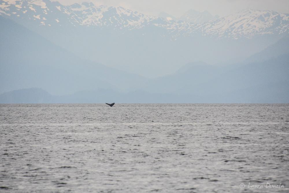 humpbacks-2138