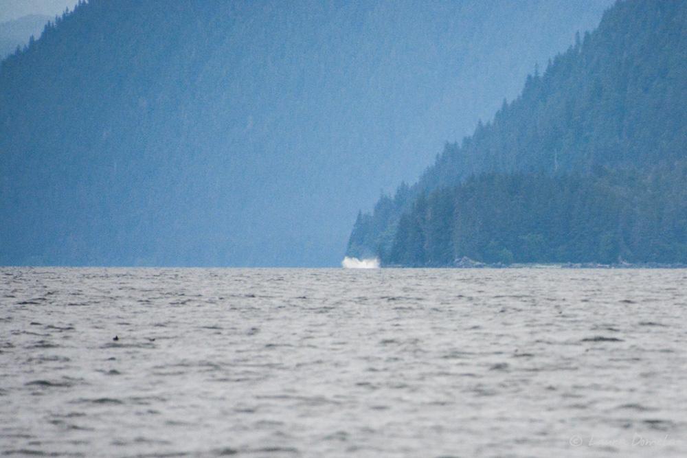 humpbacks-2151
