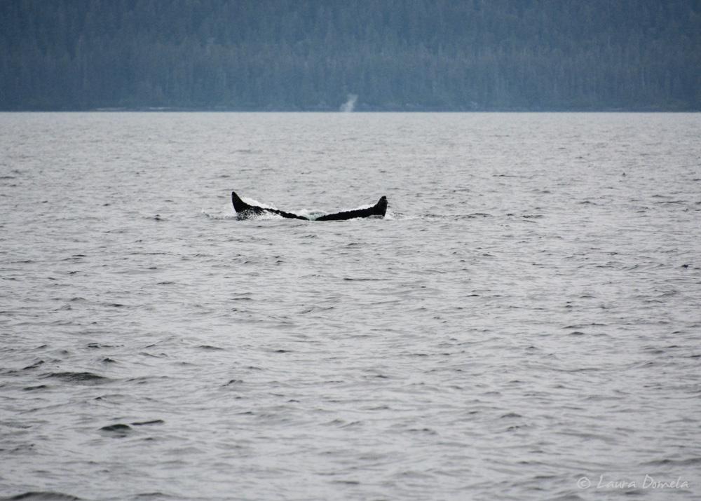 humpbacks-2182