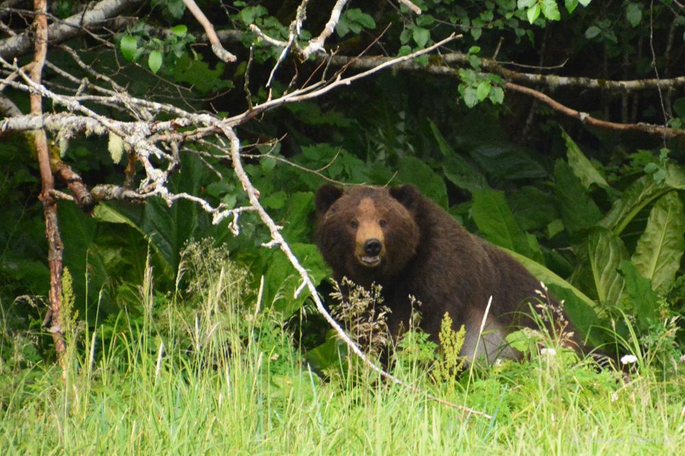 taku_bear-2295