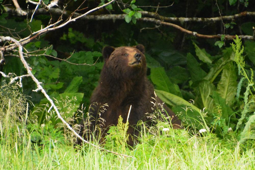 taku_bear-2297