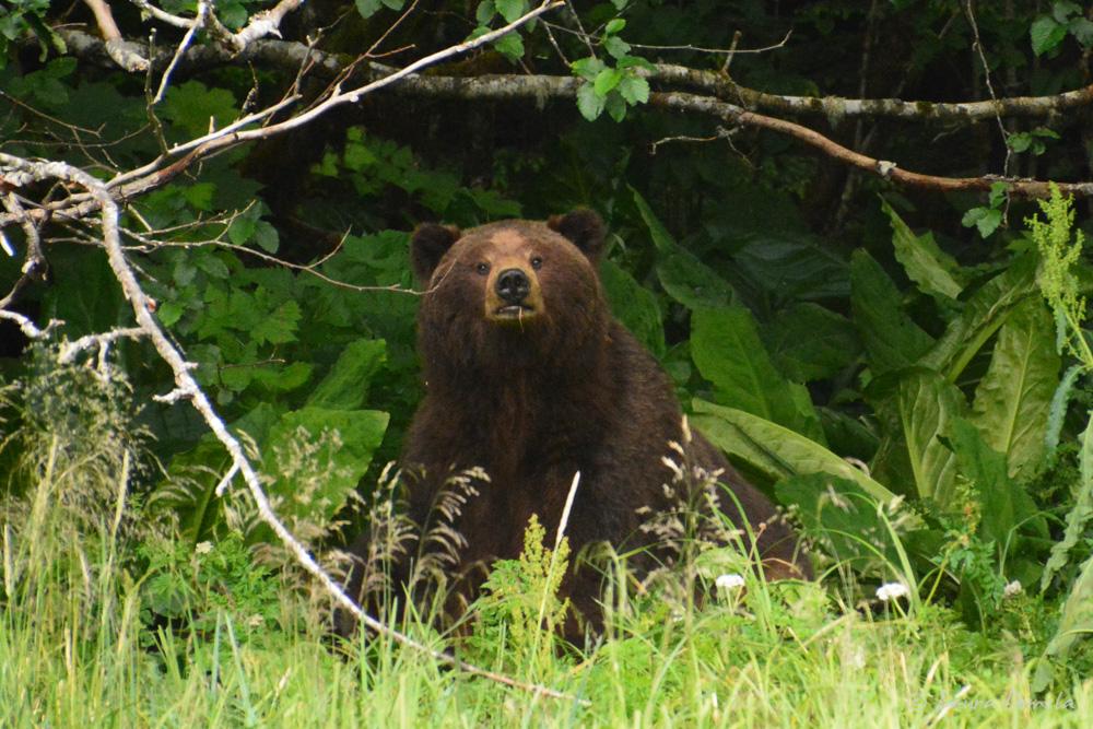taku_bear-2299