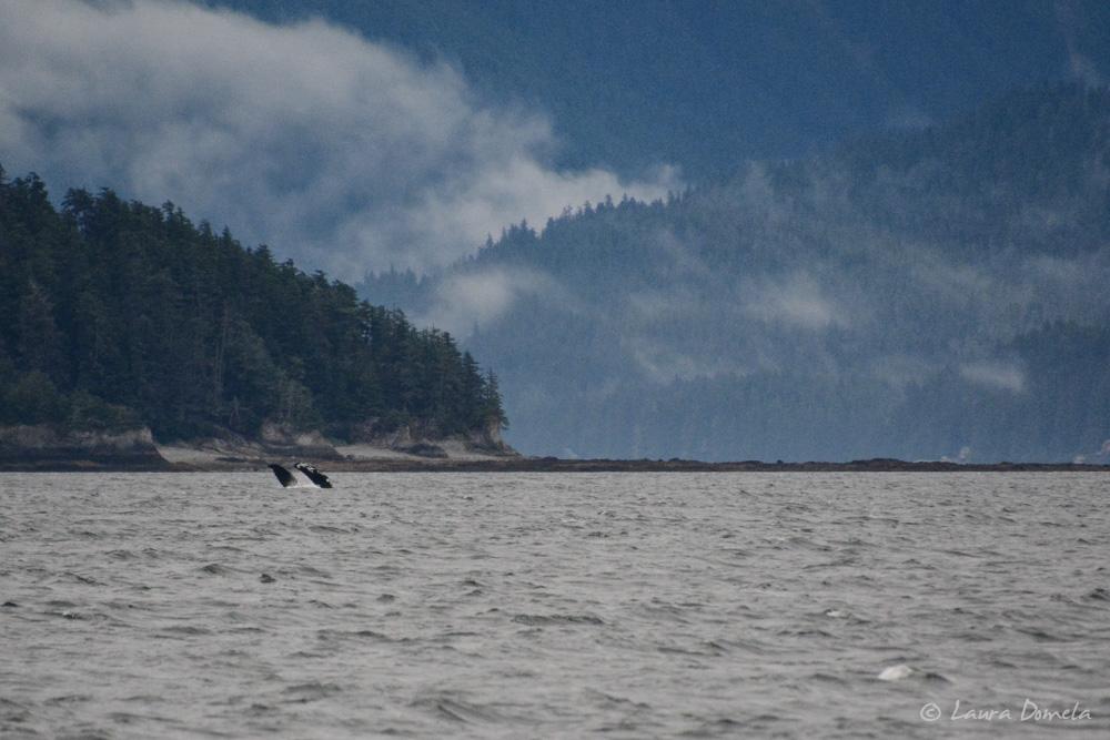 humpbacks-3430