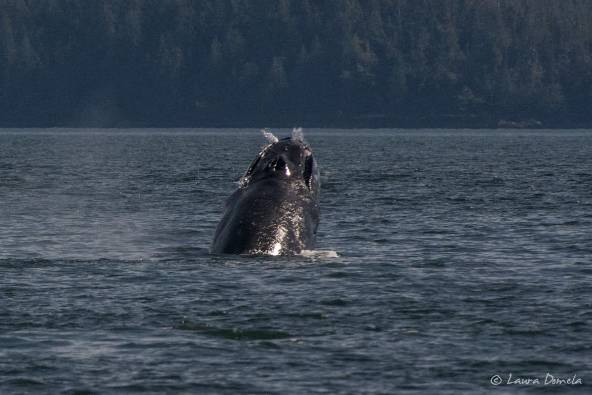 behm_humpbacks-5841