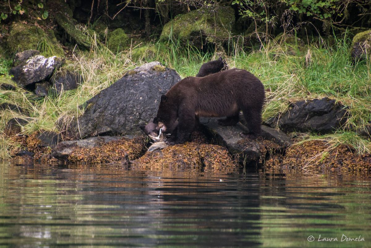walkercove_bears-5958