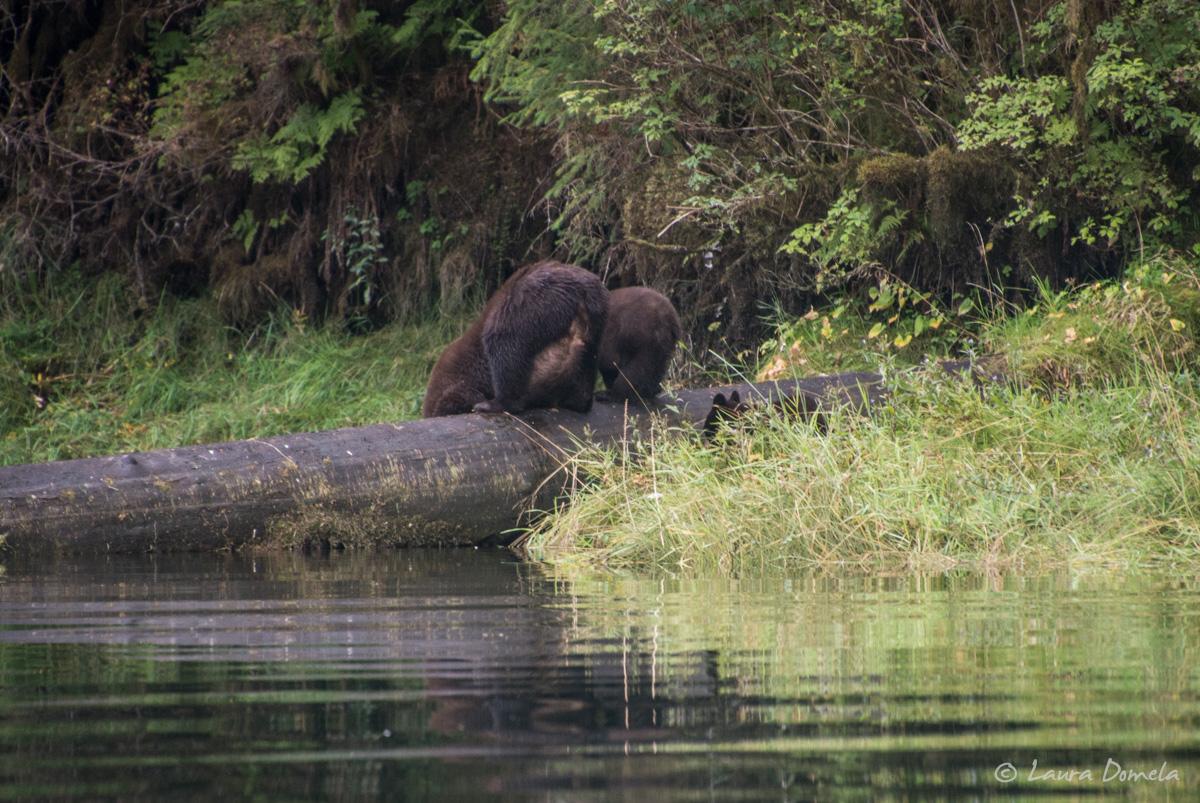 walkercove_bears-5975