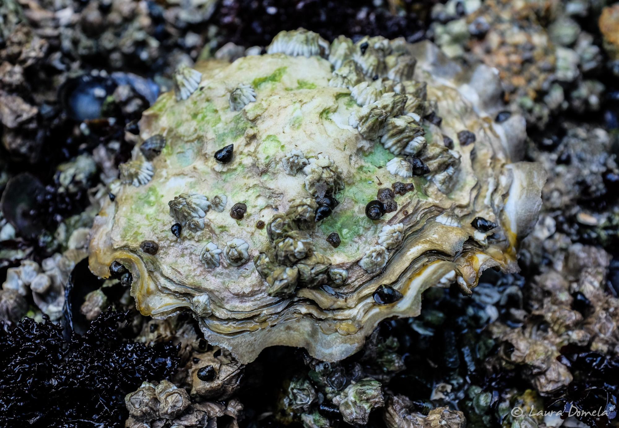 octopusislands-7194